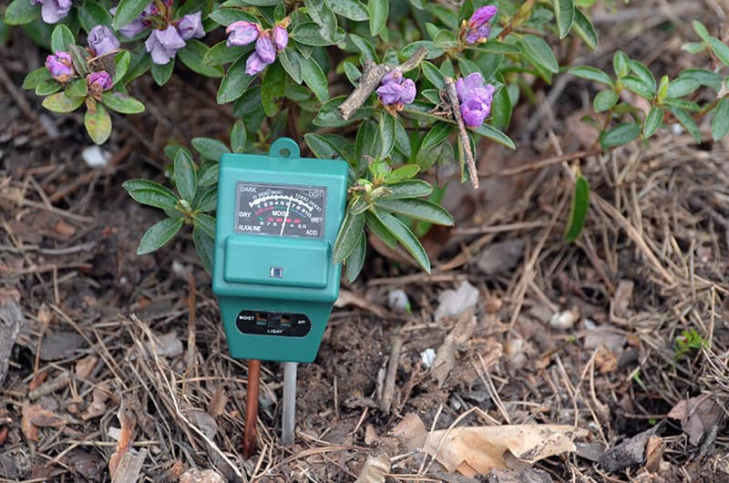 Measure the soil pH and nutrients