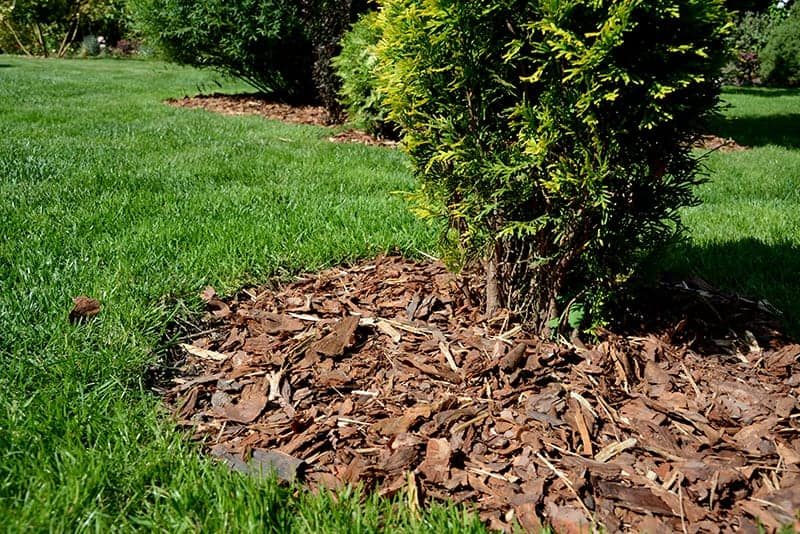 Mulch improves soil quality