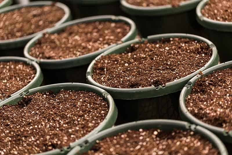 Organic vs. non-organic potting soil