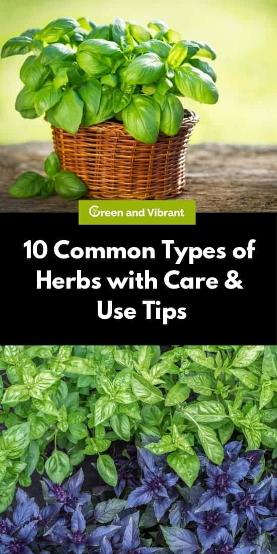 10 Common Types of Herbs with Care & Use Tips