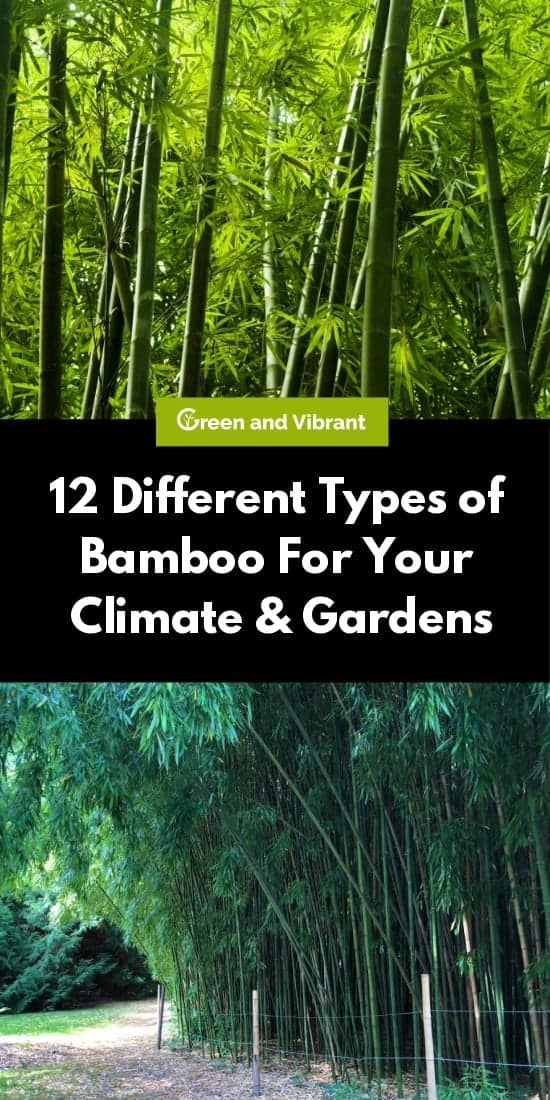 12 Different Types of Bamboo For Your Climate & Gardens