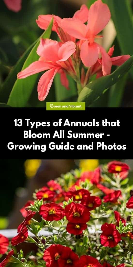 13 Types of Annuals that Bloom All Summer - Growing Guide and Photos
