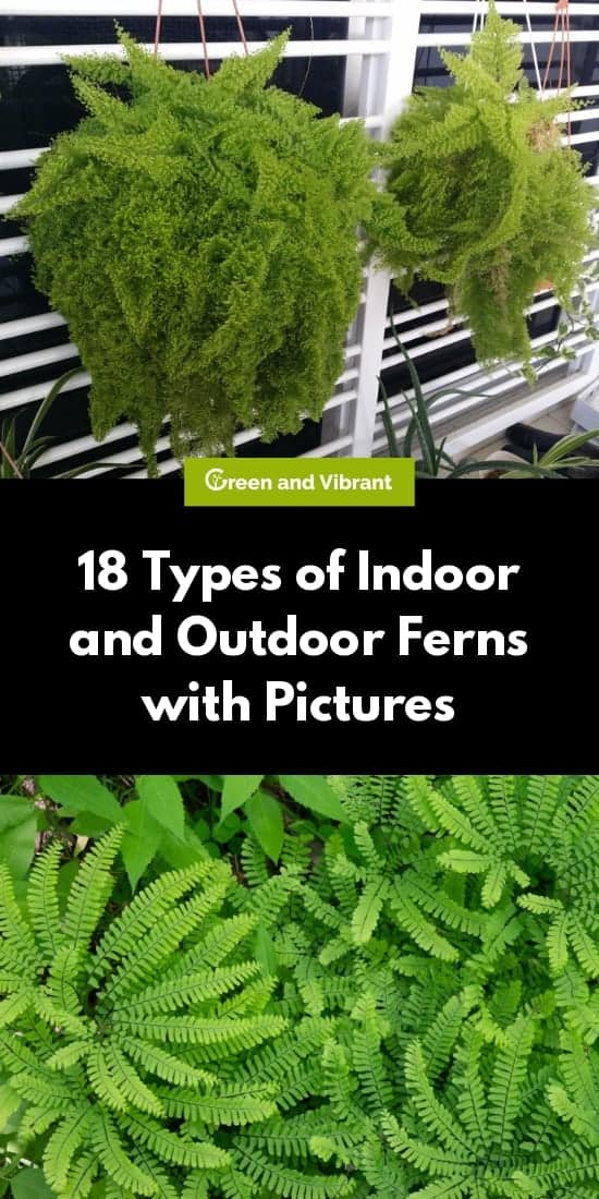 18 Different Types Of Indoor And Outdoor Ferns With Pictures