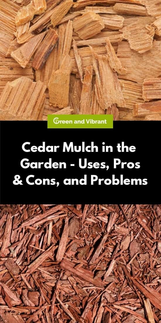 Cedar Mulch in the Garden - Uses, Pros & Cons, and Problems