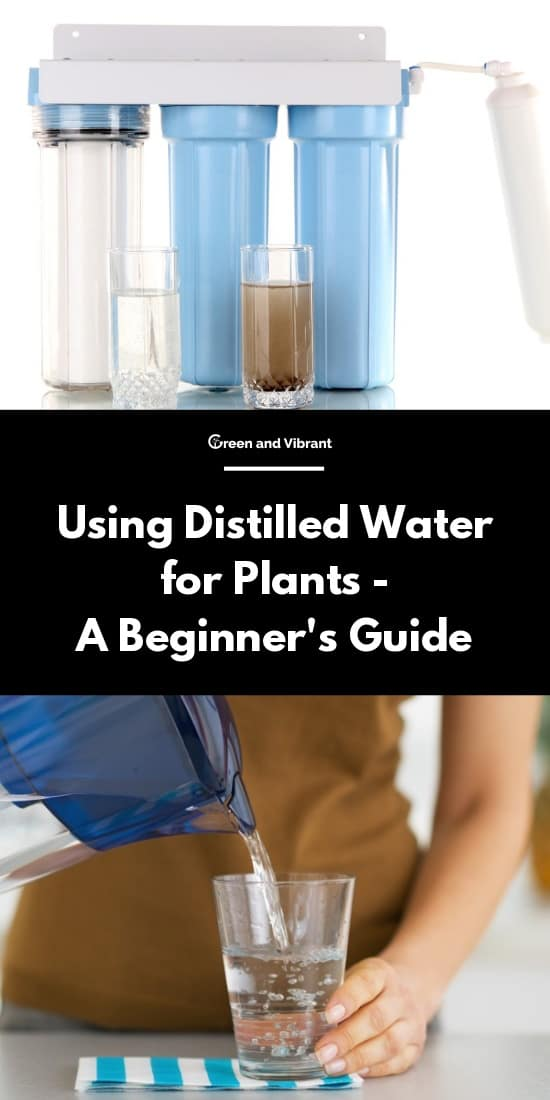 Using Distilled Water for Plants - A Beginner's Guide