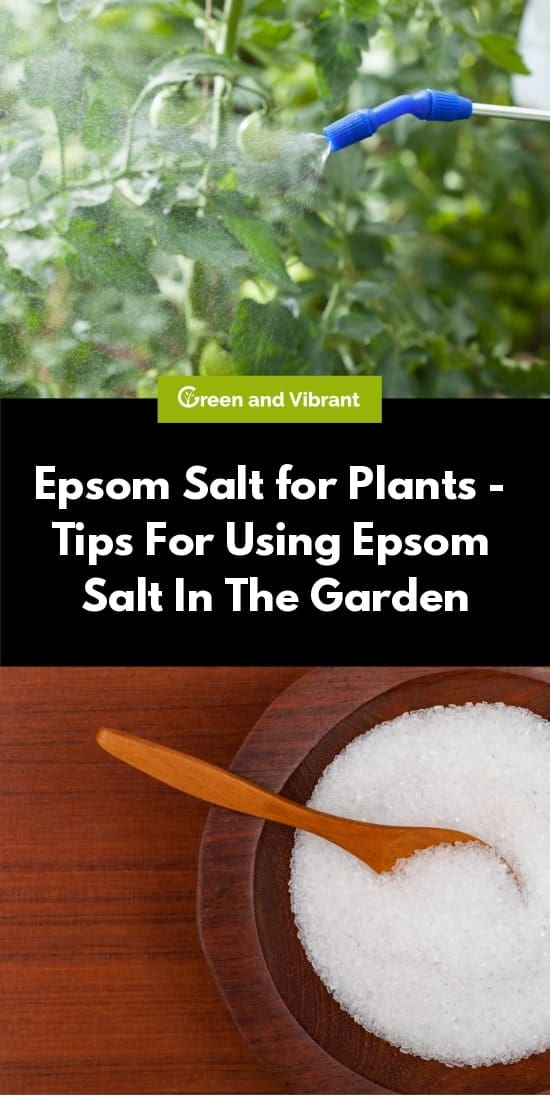 Epsom Salt For Plants Tips For Using Epsom Salt In The Garden Trees Com