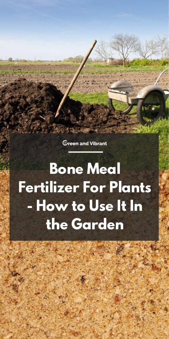 Bone Meal Fertilizer For Plants - How to Use It In the Garden