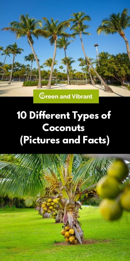 10 Different Types of Coconuts (Pictures and Facts)