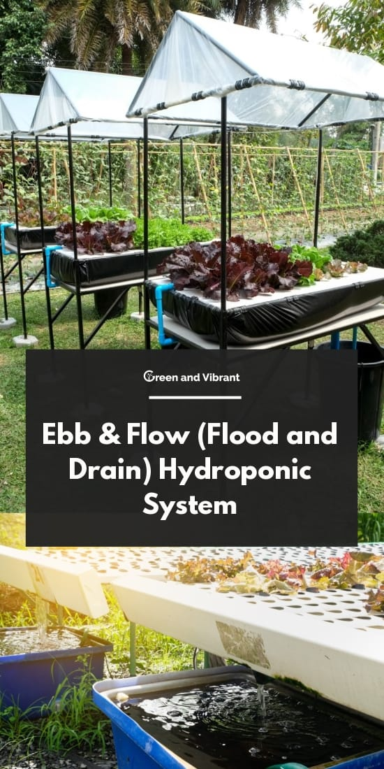 Ebb & Flow (Flood and Drain) Hydroponic System