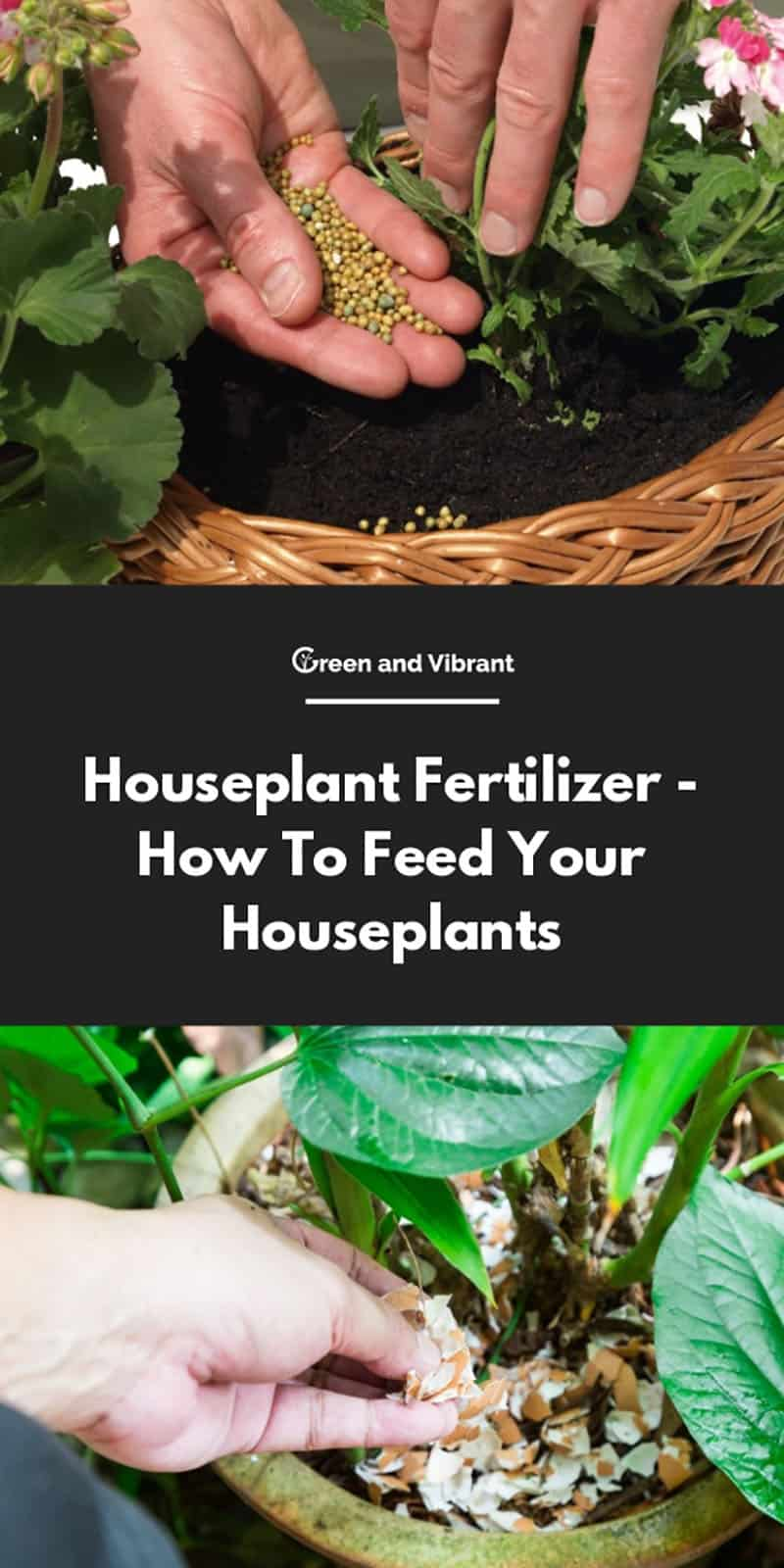 Houseplant Fertilizer - How To Feed Your Houseplants