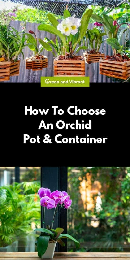 How To Choose An Orchid Pot And Container