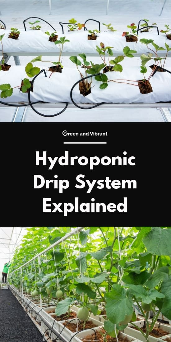 Hydroponic Drip System Explained