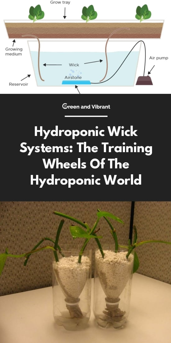 Hydroponic Wick Systems: The Training Wheels Of The Hydroponic World