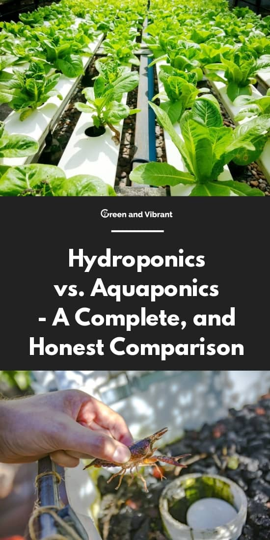 Hydroponics vs  Aquaponics - A Complete, and Honest Comparison