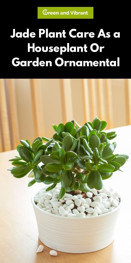 Jade Plant (Crassula ovata) - Types, Growing, Care Tips & Common Problems