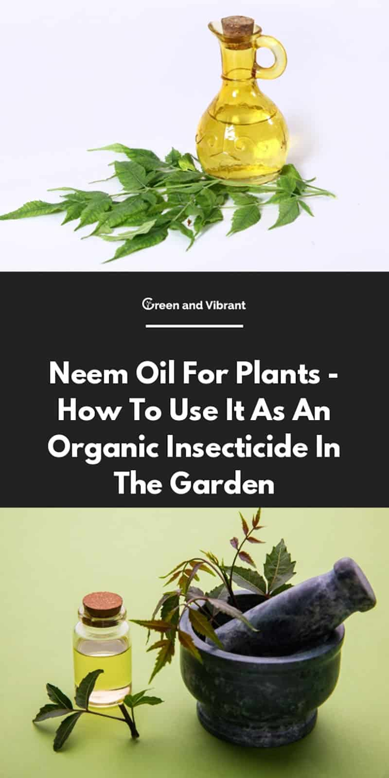 Neem Oil For Plants - How To Use It As An Organic Insecticide In The Garden