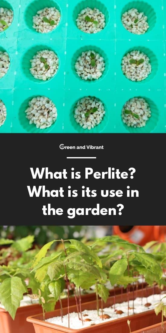 ¿Qué es la perlita?  ¿Para qué sirve en el jardín?