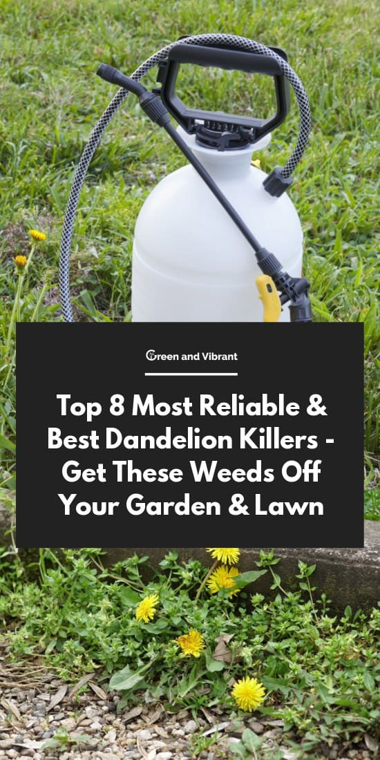 Top 8 Most Reliable & Best Dandelion Killers - Get These Weeds Off Your Garden & Lawn