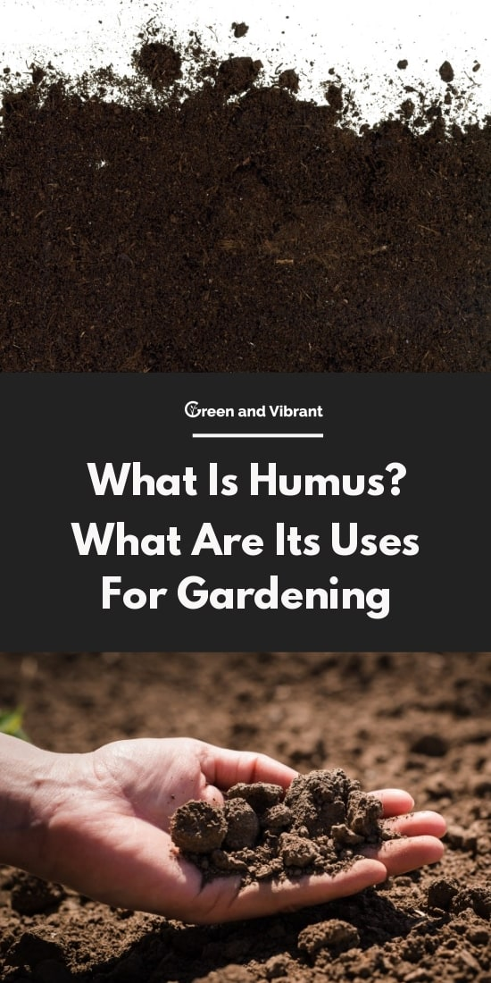 What Is Humus? What Are Its Uses For Gardening
