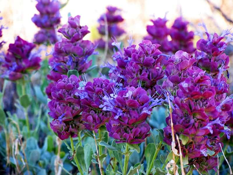 Different Types Of Purple Flowers With Pictures Green And Vibrant