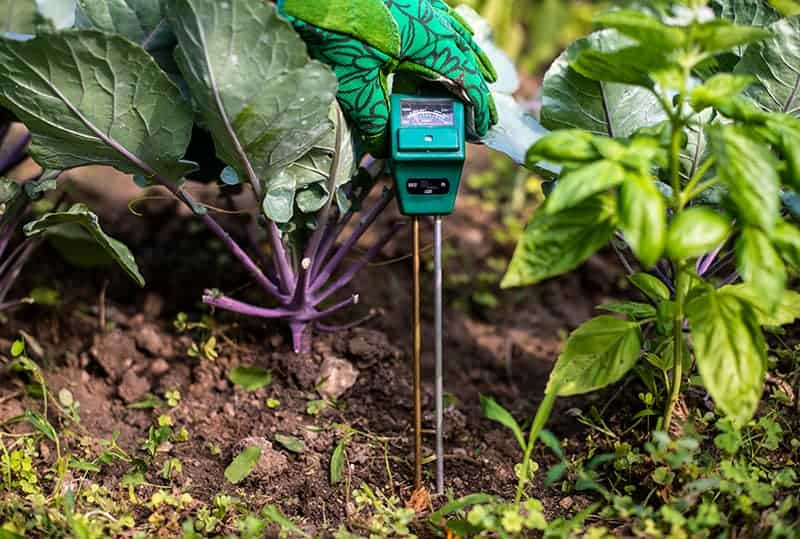 Best Soil Moisture Meters - Buying Guide & Recommendation | Trees.com