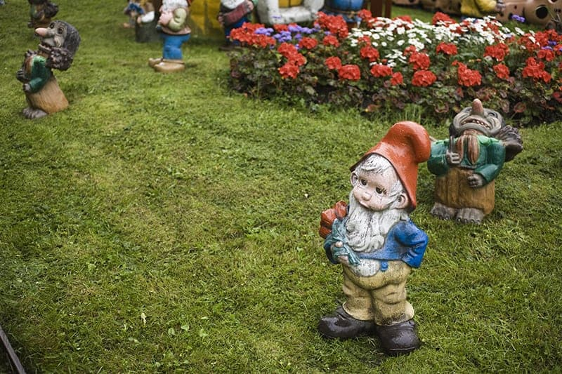 Some types of garden gnomes on a lawn