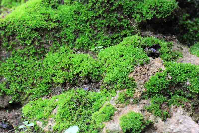What Is Peat Moss What Is It Used For Green And Vibrant