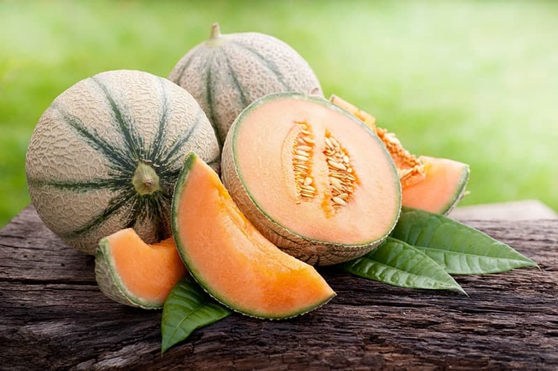Cantaloupe - Cucumis melo var. Cantalupensis