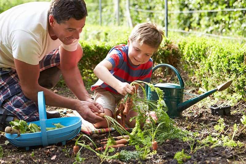 Children's Veg Garden