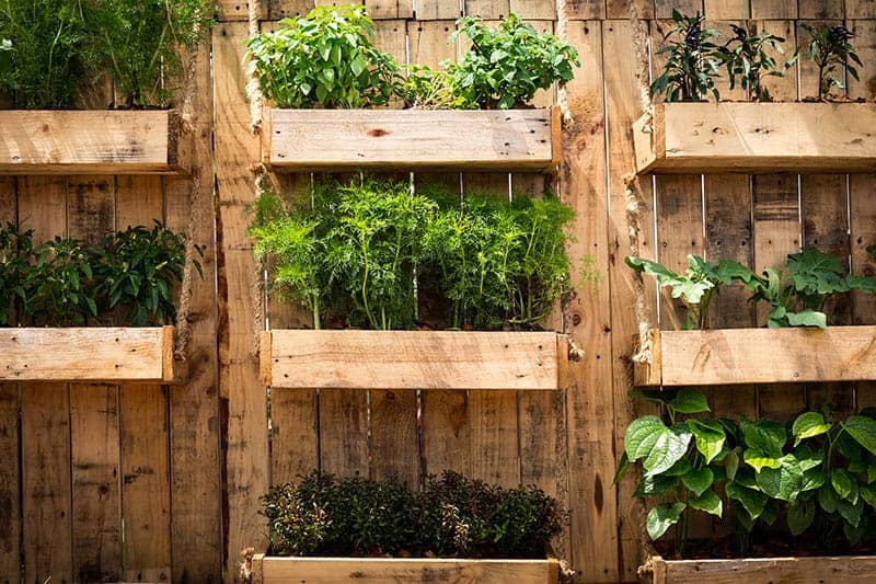 25 Incredible Vegetable Garden Ideas Green And Vibrant