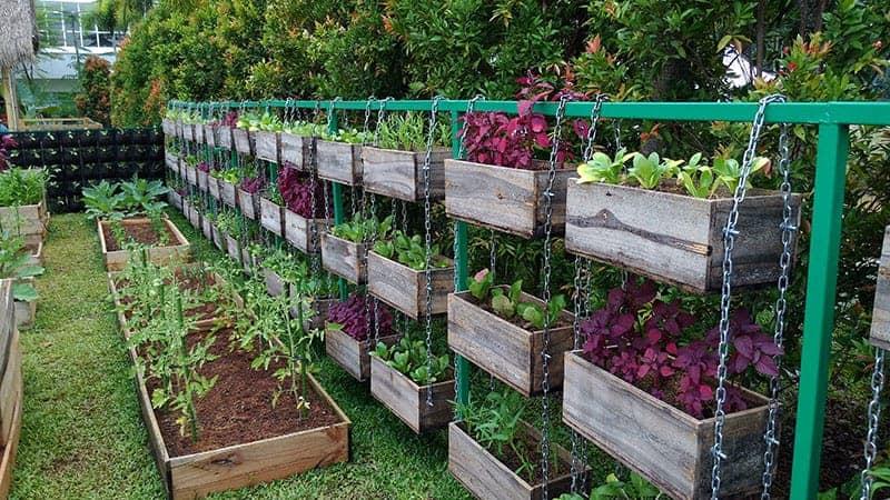 25 Incredible Vegetable Garden Ideas | Trees.com