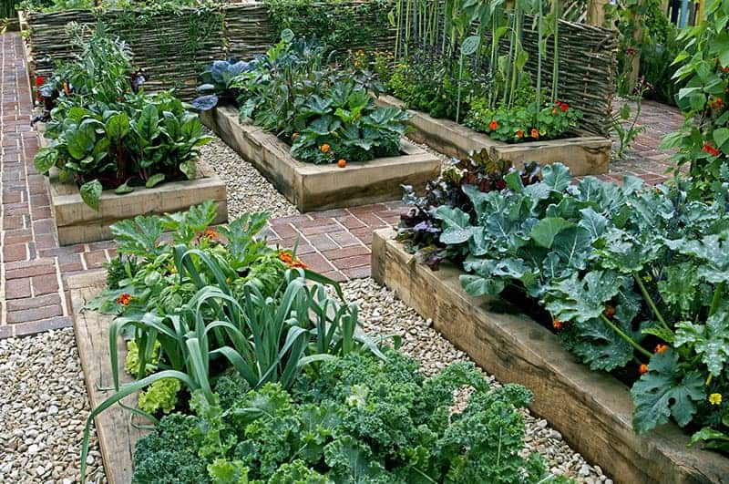 Vegetable Garden Idea Raised beds are a sleek looking way to have your vegetable garden presented  in your backyard. It looks clean and landscaped, while also being  functional; ...