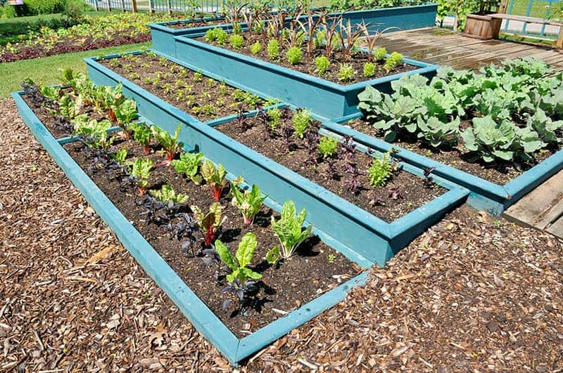 Tiered Vegetable Plants