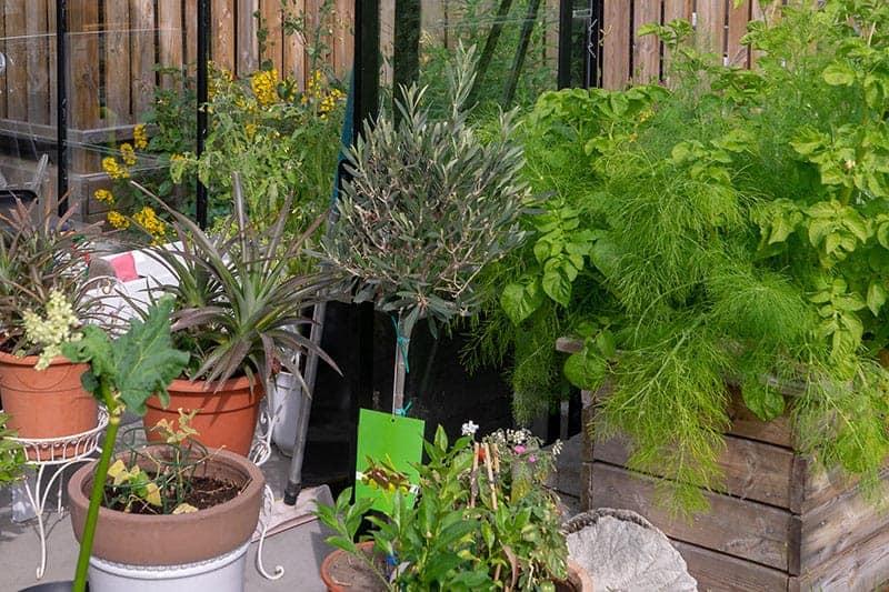 Yard Sale Pots