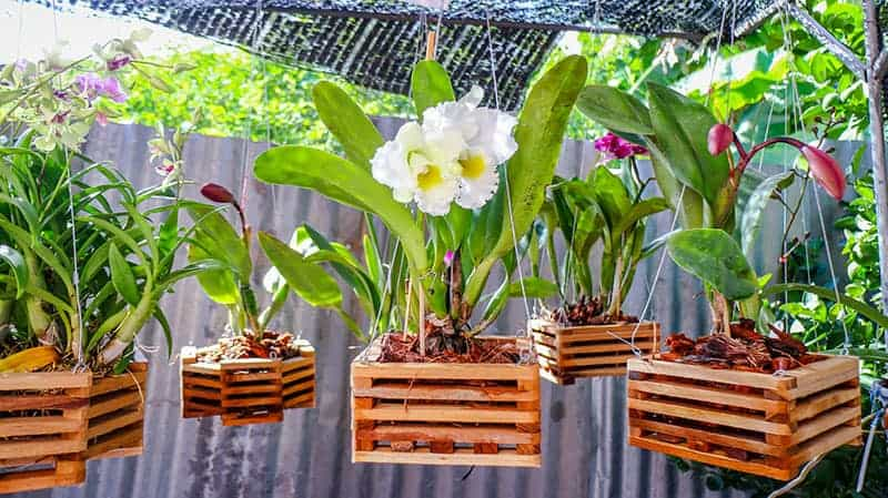 Wooden orchid pots in the garden