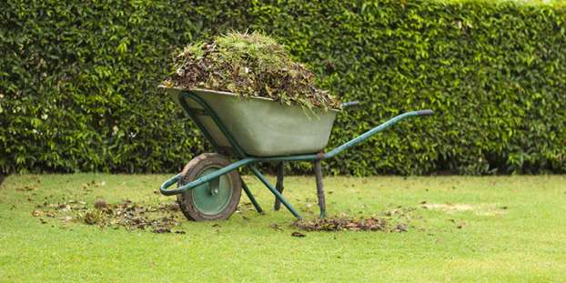 Wheelbarrow filled with leaves on green grass lawn in a farm garden