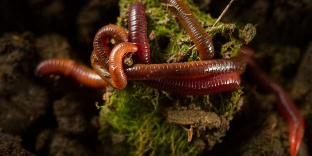 Types of Earthworms
