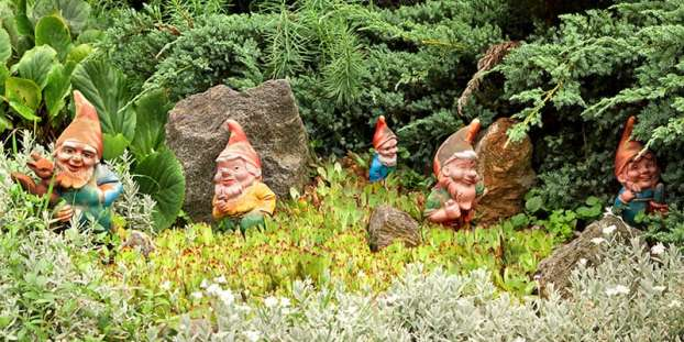 Some decorative garden gnomes in the garden